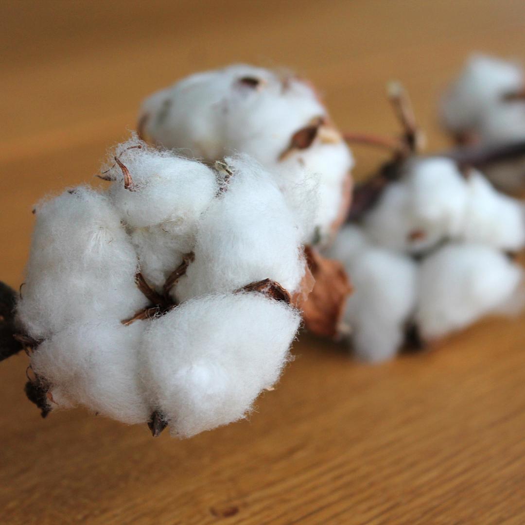 超長綿,特徴,素材